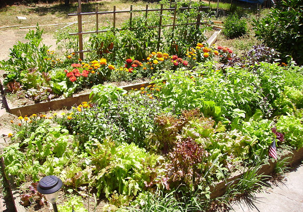 Full Raised Beds